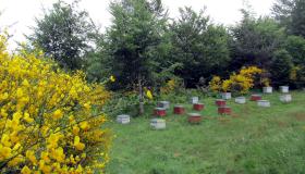Canicule 2019 : calamité agricole / Mars / 2020 / Actualités des services /  Actualités / Accueil - Les services de l'État en Lozère